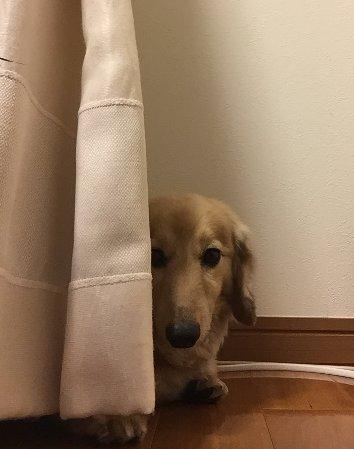 犬のしつけ~噛み癖をつけないようにするには?~