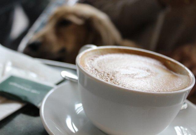 Caffe Michelangelo紹介のアイキャッチ画像