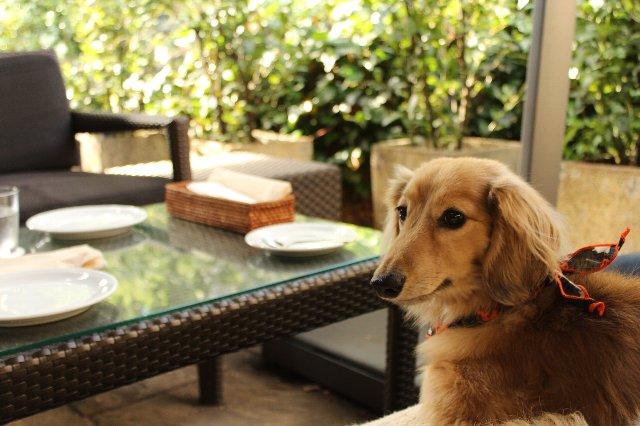 早朝から犬と一緒にカフェ出来る代官山の人気店「IVY PLACE」