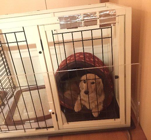 犬用サークル
