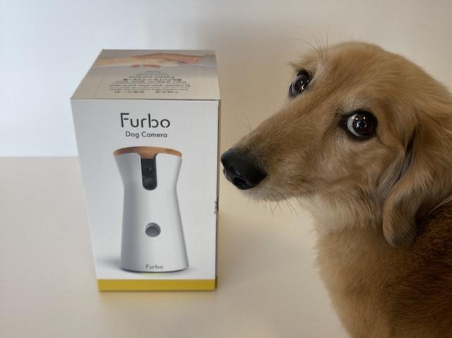 Furbo(ファーボ)を購入しようか悩まれている方必見!後悔しないのはどんな人?