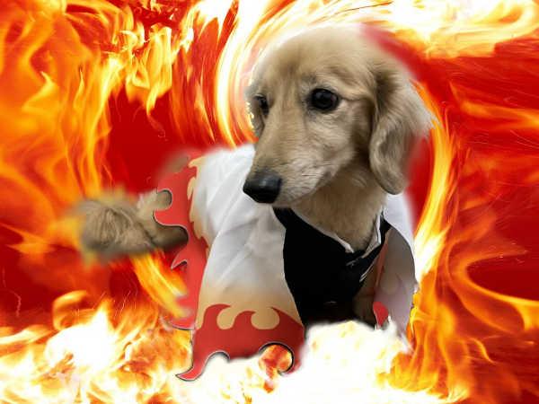 煉獄さん犬服