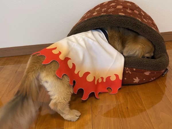 鬼滅の刃煉獄さん犬服