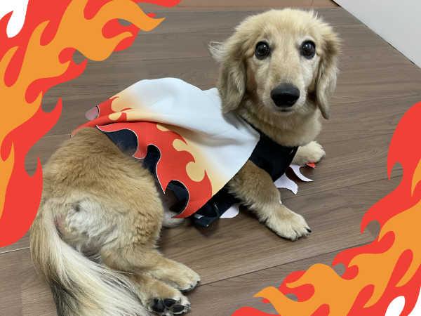 鬼滅の刃犬服-側面