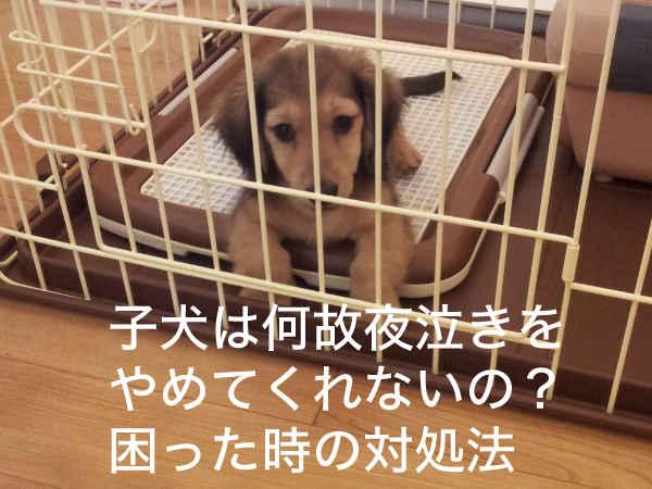 子犬の夜泣き