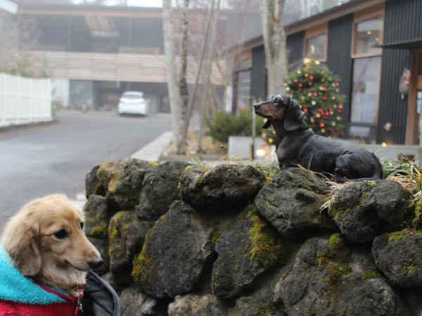 シュガースポットコーヒー 犬の像写真