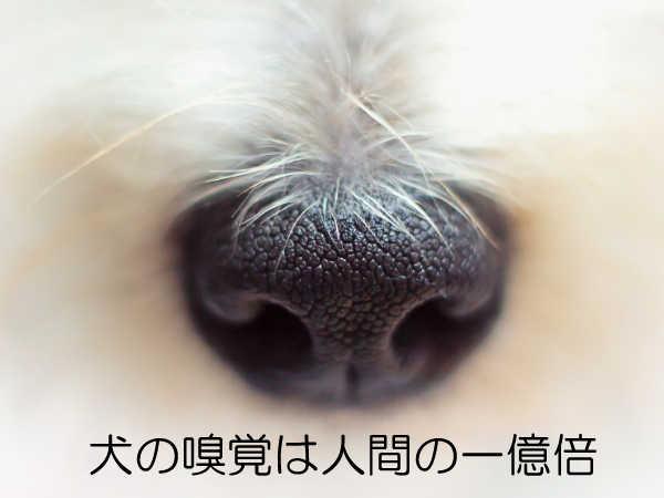 ノーズワーク_解説