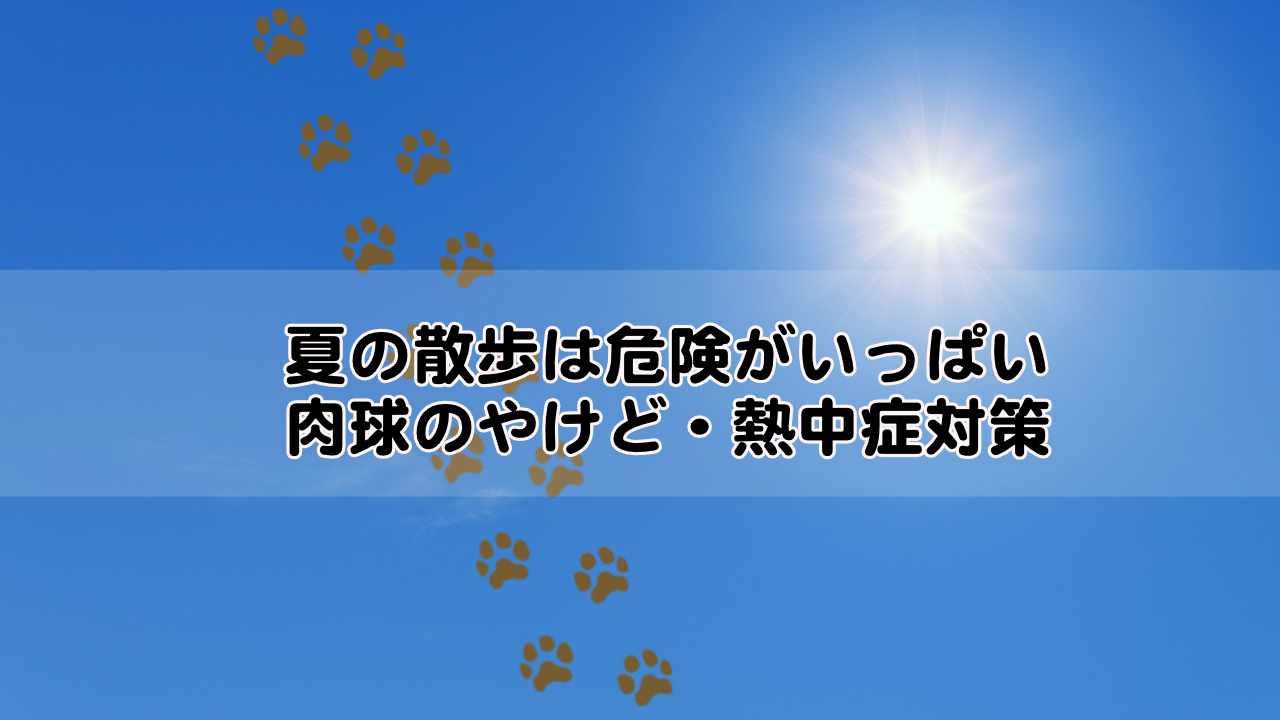 夏のお散歩は危険がいっぱい。肉球の火傷や熱中症にオススメの対策は?